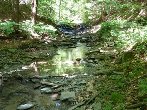 45 Acres Marketable Timber Creek : Richford : Tioga County : New York