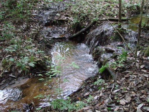 Beautiful 25 Ac Timber-hunting : Ellaville : Schley County : Georgia