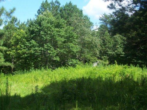 Rural / Recreational : Homer : Banks County : Georgia