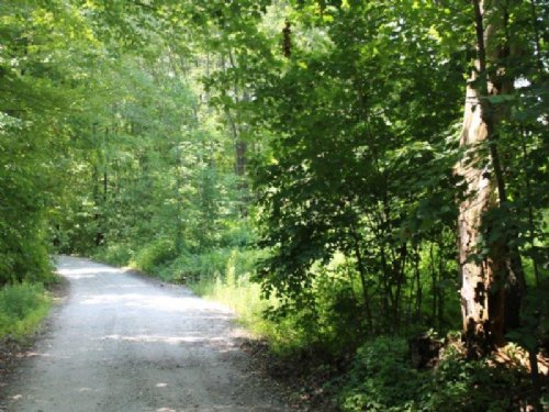 18 Acres Secluded Hunting Land : Diana : Lewis County : New York