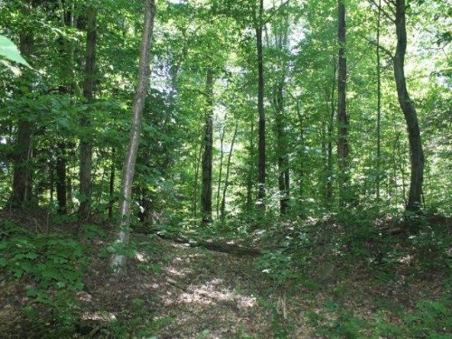 11 Acres Bordering State Forest : Amboy : Oswego County : New York