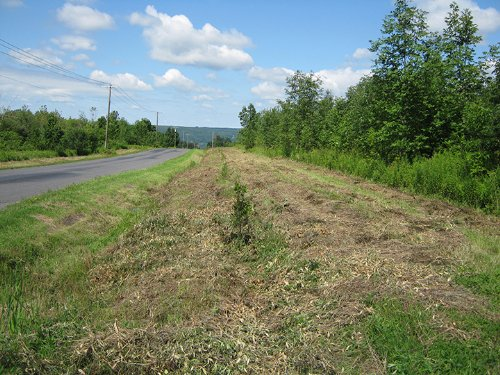 31+ Acres Building Lot Hunting Land : Moravia : Cayuga County : New York