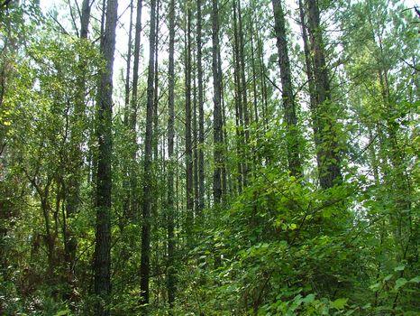 330 Acres : Vidalia : Toombs County : Georgia