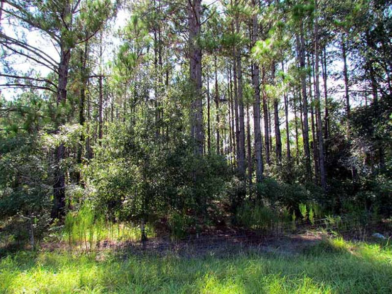 1.14 Acres Nice Wooded Lot : Chiefland : Levy County : Florida
