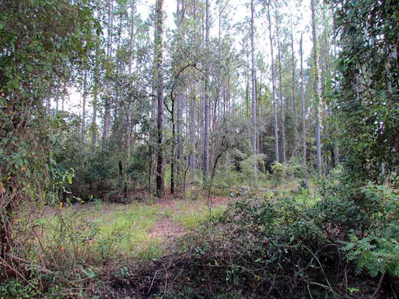 3.46 Acres In Subdivision : Chiefland : Levy County : Florida
