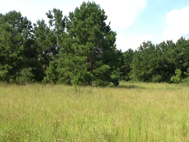 Galloway Tract : Brundidge : Pike County : Alabama