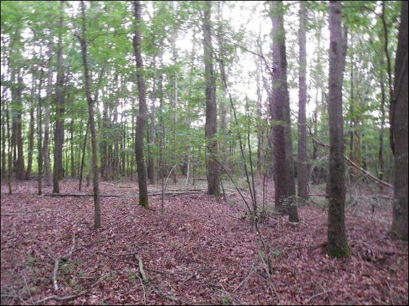 80 Acres : Philadelphia : Neshoba County : Mississippi