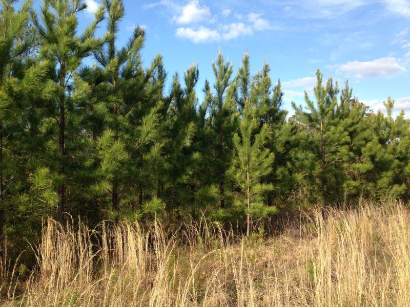 H. Thompson Road #4 : Hattiesburg : Lamar County : Mississippi