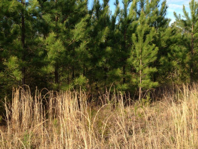 H. Thompson Road #5 : Hattiesburg : Lamar County : Mississippi