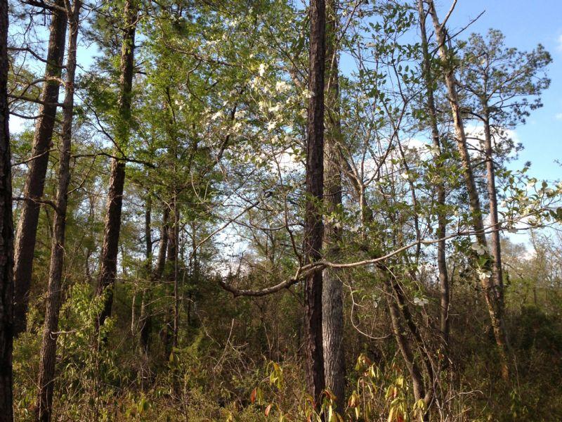 H. Thompson Road #6 : Hattiesburg : Lamar County : Mississippi