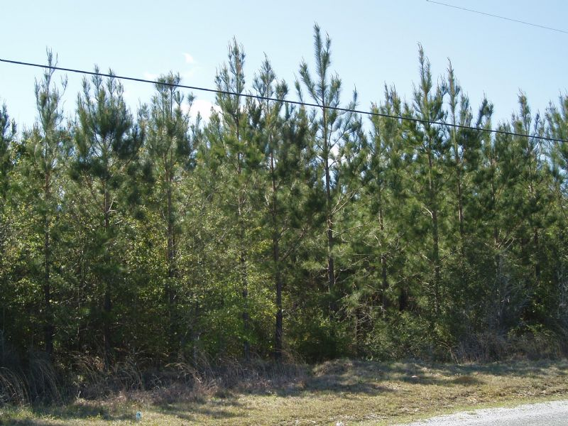 Argile Smith Road #6 : Millard : Pearl River County : Mississippi