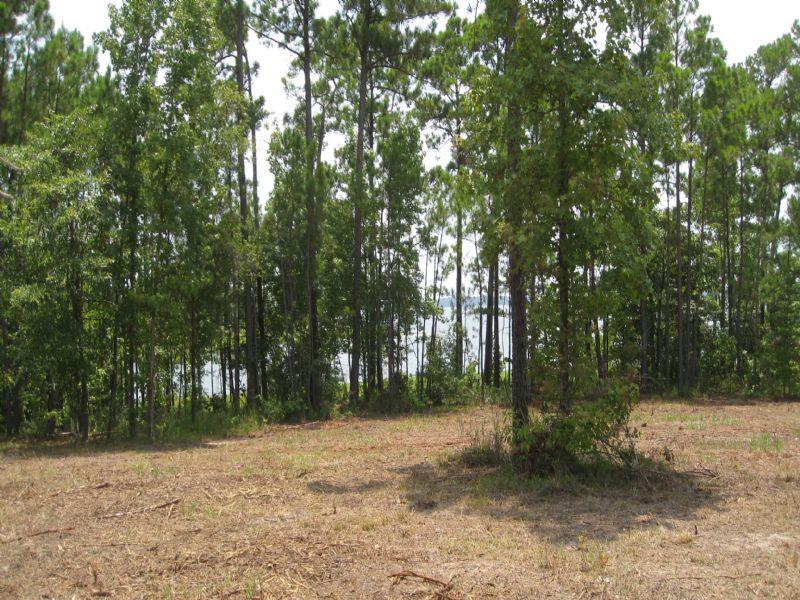 Needmore Point Lake Tract 3 : Broaddus : San Augustine County : Texas