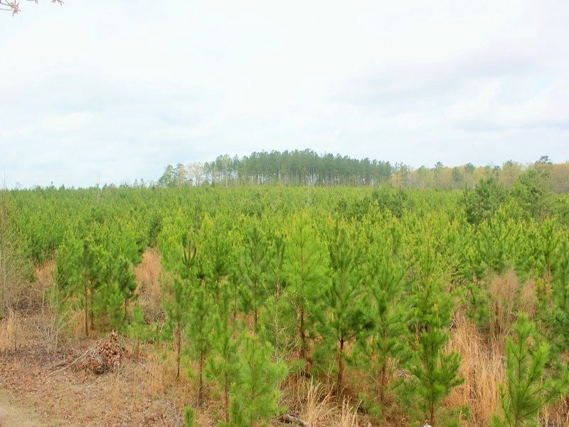Long-term Timber Investment : Sandersville : Washington County : Georgia
