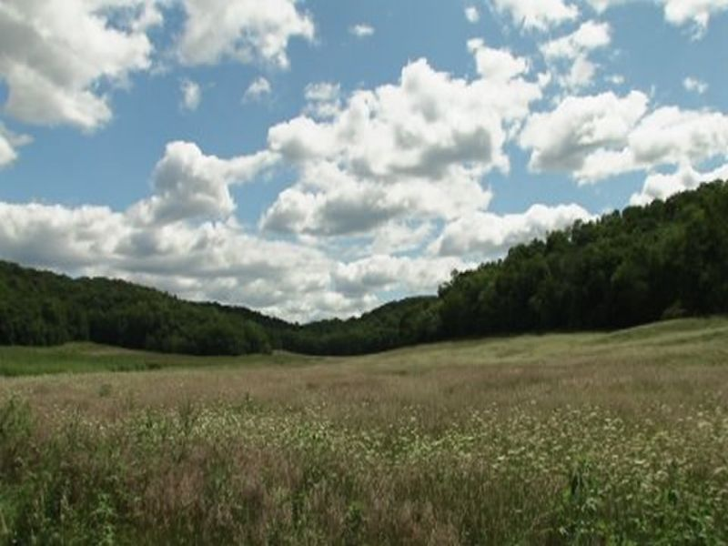 Beautiful 339 Acres With Tillable : Arena : Iowa County : Wisconsin