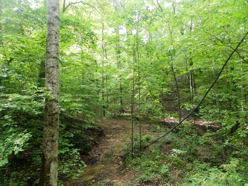 Great Timber Tract : Berry : Fayette County : Alabama