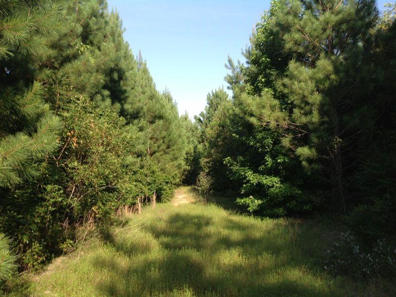 Timber And Hunting Land : Warrenton : Warren County : Georgia