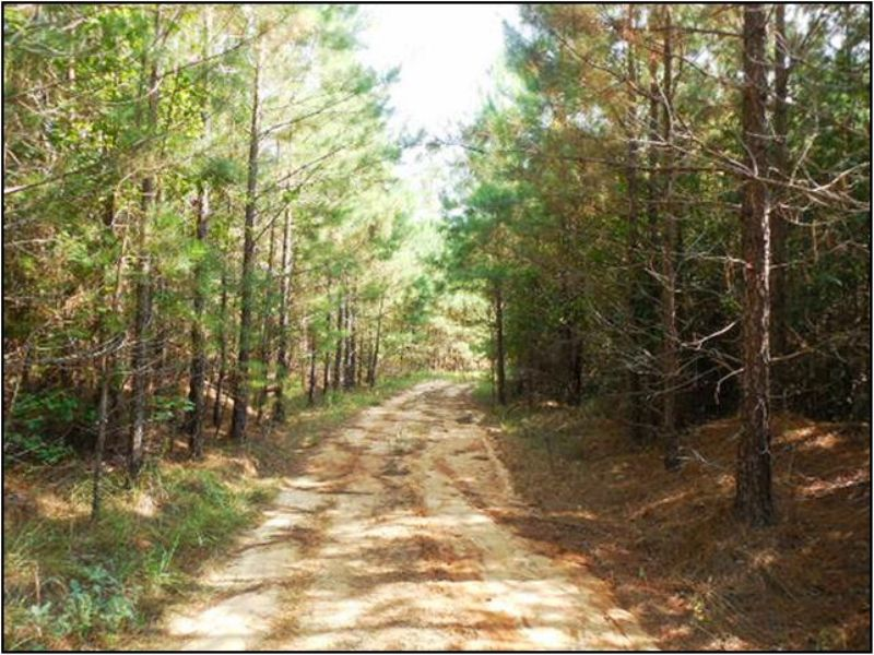 238 Acres : Kosciusko : Attala County : Mississippi