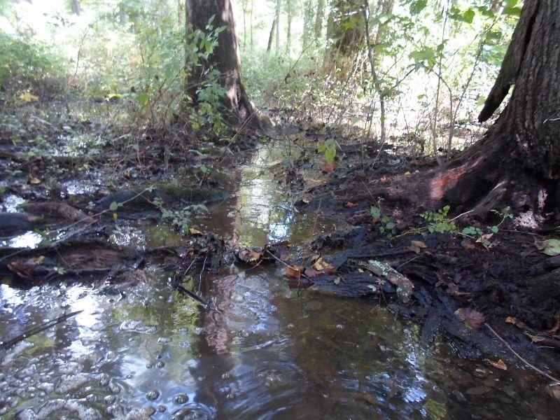 $55k 41 Ac. Creek & Home Site : Harrison : Washington County : Georgia