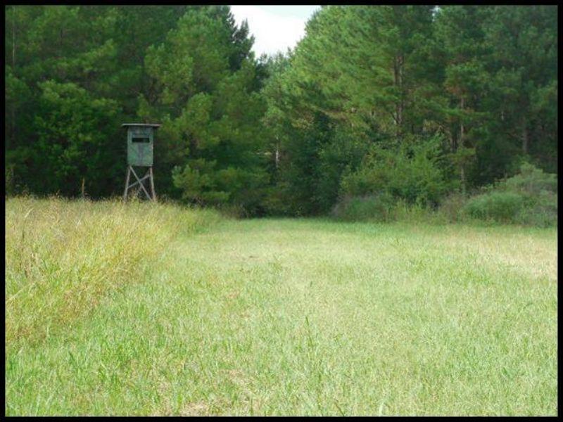 262 Acres : Macon : Noxubee County : Mississippi