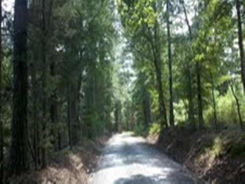 Well Managed Tree Farm : Saluda : Saluda County : South Carolina
