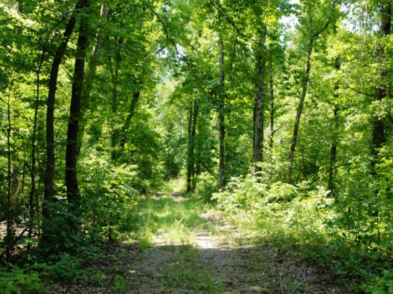 472ac Hunting Property In Elk Area : Snowball : Searcy County : Arkansas