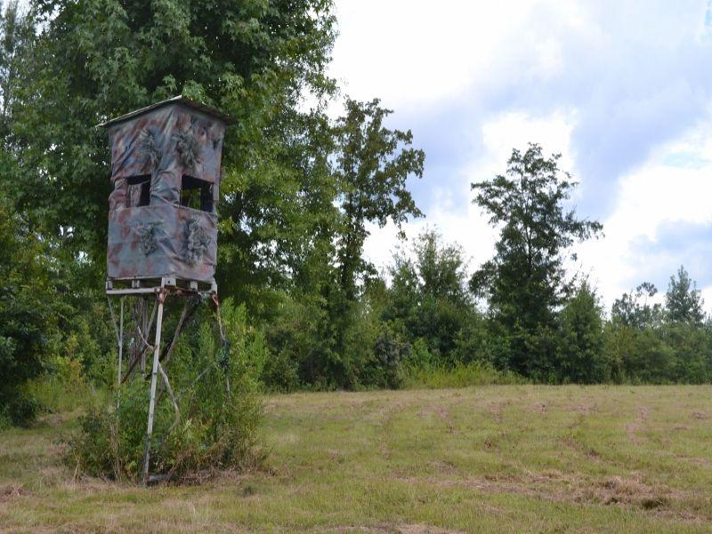 $850/ac. Deer Hunt Now 264 Acres : Sandersville : Washington County : Georgia