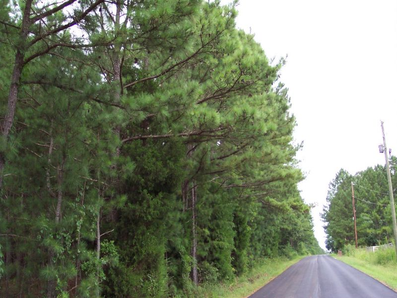 8.32 Wooded Acres Tract 1 : Taylorsville : Bartow County : Georgia