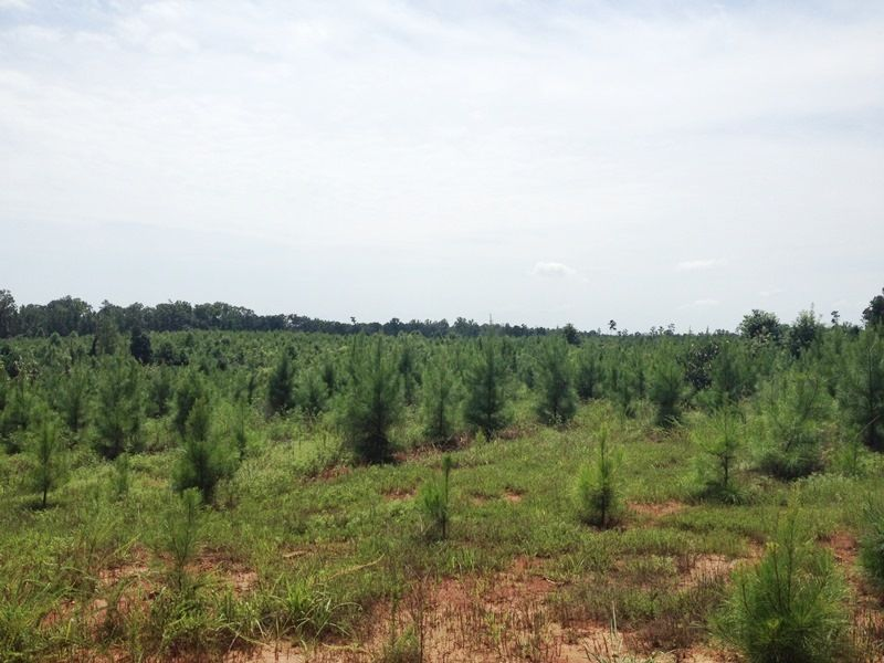 Timber And Hunting Investment : Tignall : Wilkes County : Georgia