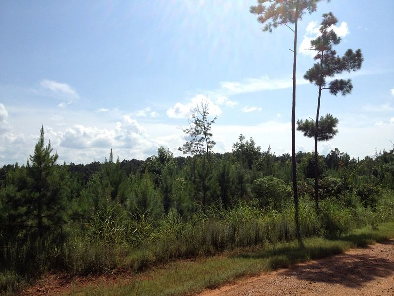 Timber And Hunting Investment : Crawfordville : Taliaferro County : Georgia