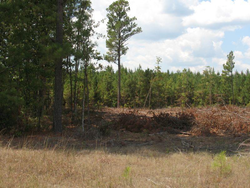 +/- 8.97 Acres : Hampton : Calhoun County : Arkansas