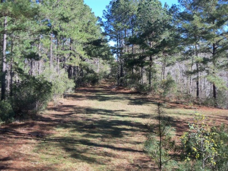 Beautiful Hunting Retreat : Darien : McIntosh County : Georgia