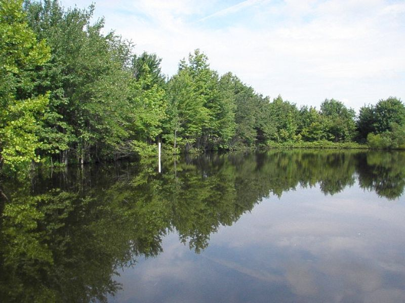 Pond-erosa : Charlote Court House : Charlotte County : Virginia