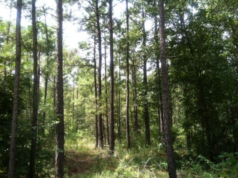 Hunting And Timber Investment : Knoxvile : Crawford County : Georgia