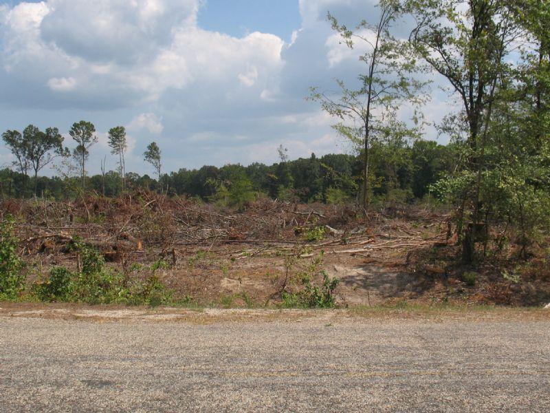 +/- 22.81 Acres : Hampton : Calhoun County : Arkansas