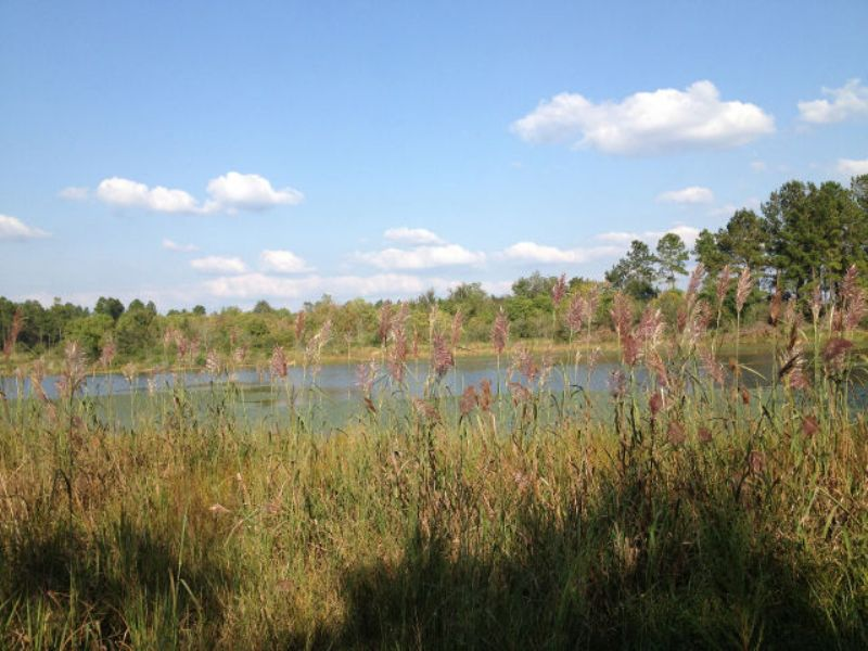 9.92 Acres - Waterfront/no Restrict : Poplarville : Pearl River County : Mississippi