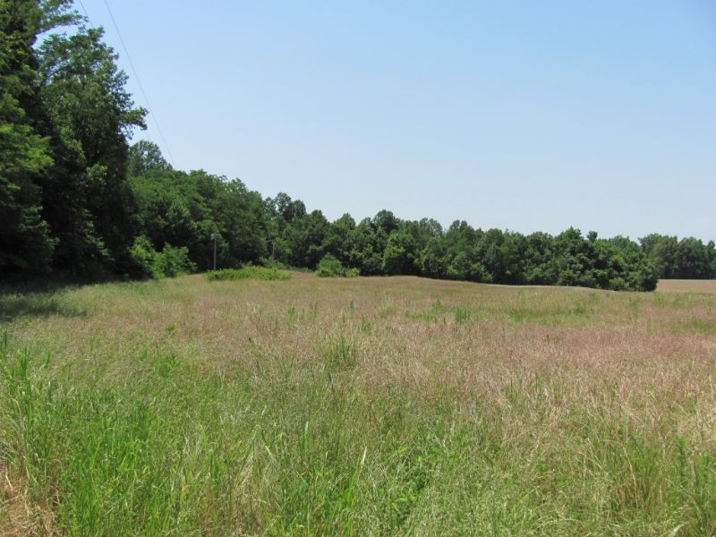 14 Acres Bordering State Park : Wildersville : Henderson County : Tennessee