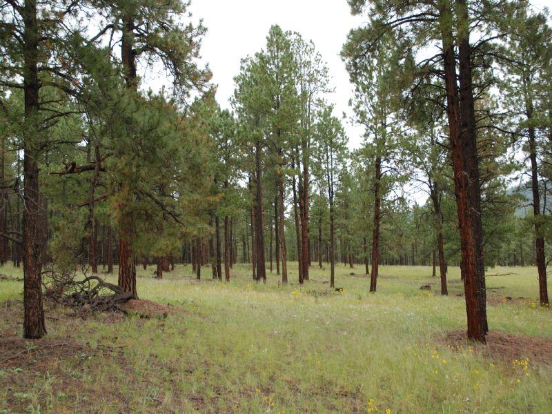 Forested Northern Arizona Estate : Alpine : Apache County : Arizona