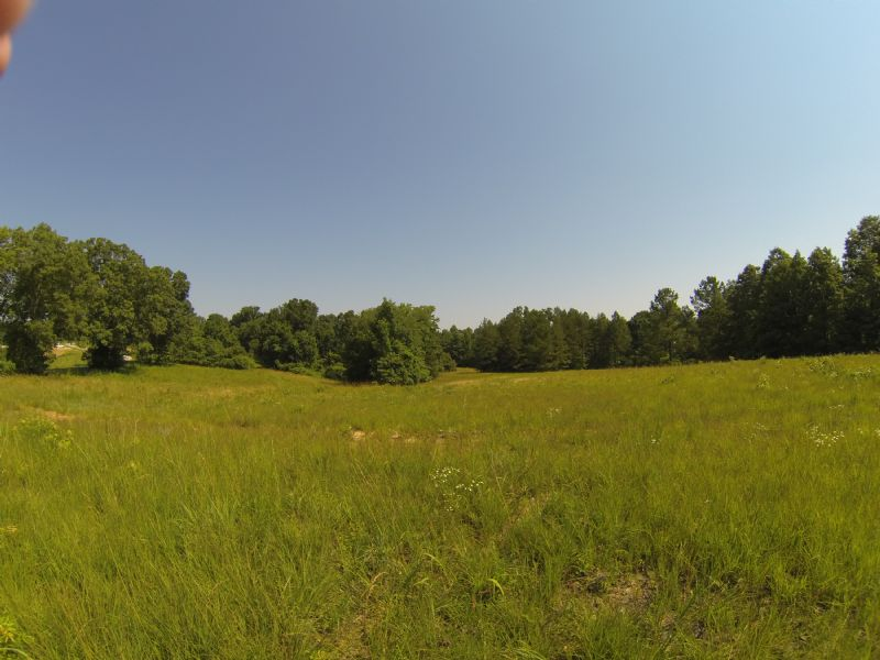 35 Acres Pasture And Woods : Lexington : Henderson County : Tennessee