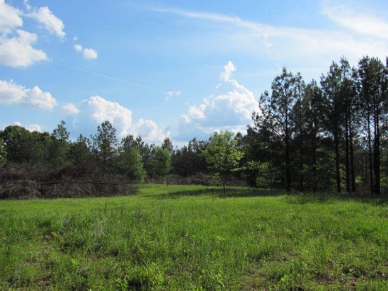 18 Acres Fantastic Sites : Wildersville : Henderson County : Tennessee