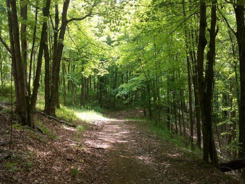 215 Acres On Harmony : Athens : Athens County : Ohio