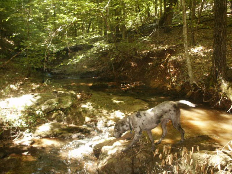 Hunting And Timber Investment : Rockford : Coosa County : Alabama