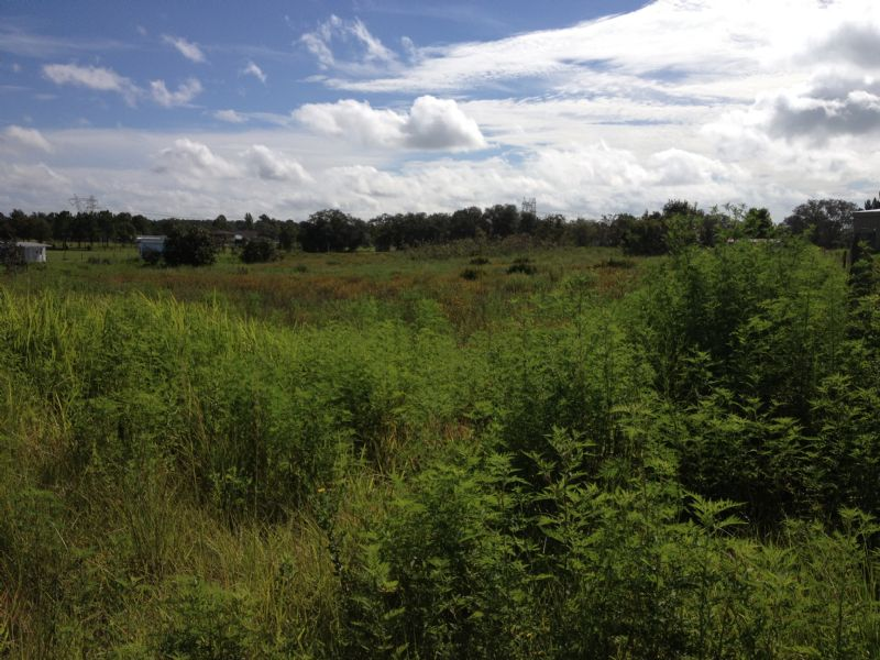 2.5 Ac Pasture Close To Amenities : Brooksville : Hernando County : Florida