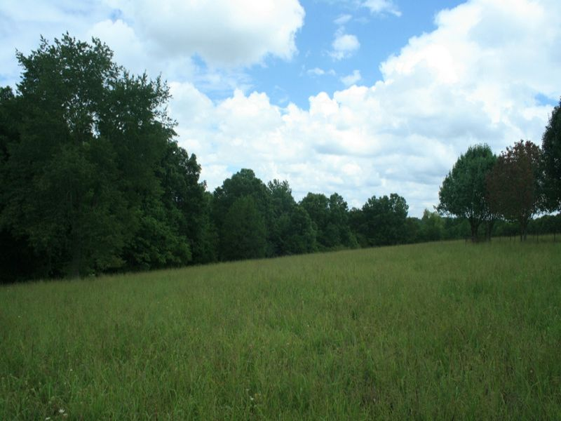 37 Acres Near Natchez Trace Pwy : Primm Springs : Hickman County : Tennessee