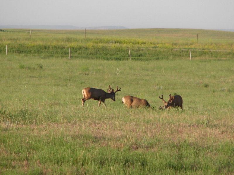 Sage Creek Ranch  1680 Acres : Lusk : Niobrara County : Wyoming