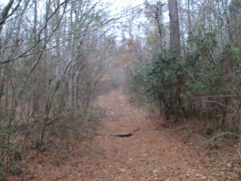 80+/- Acres On Saltsman Road : Alexander City : Tallapoosa County : Alabama