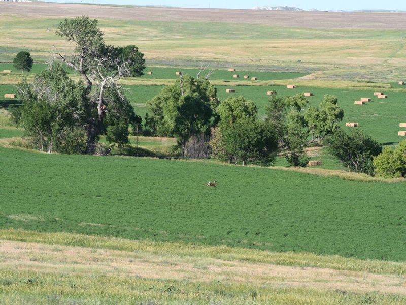 Ranch And Farm : Whitney : Dawes County : Nebraska