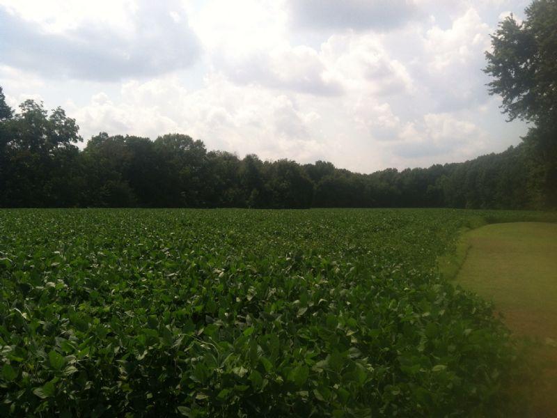 23 Acres Of Farm Land In Gleason : Gleason : Weakley County : Tennessee