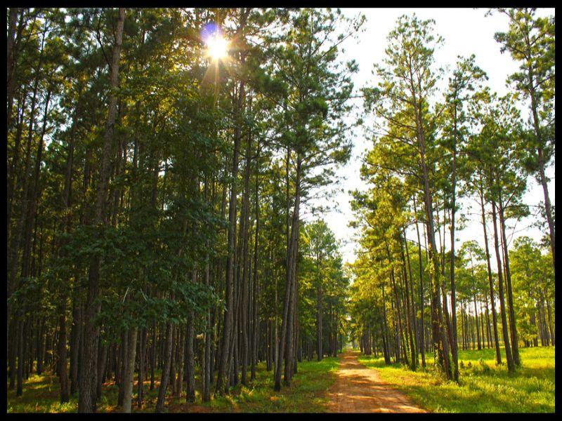 798 Acres Ranch / Dev : Conroe : Montgomery County : Texas