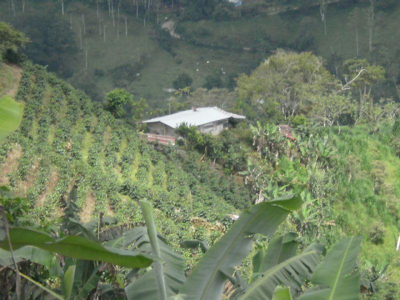 Working Farm, 168 Ac. Sugar Cane : La Suiza De Turrialba : Costa Rica