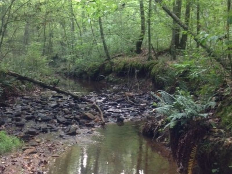 575+/- Old Dutch Rd/cr98 : Daviston : Tallapoosa County : Alabama